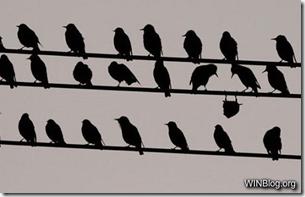 non-conformity-win